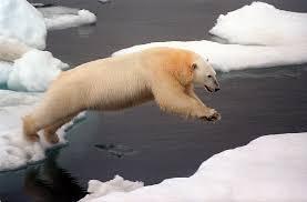 hoppande isbjörn